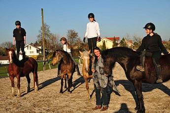 die welsh cobs pferde reiten f r kinder jugendliche und erwachsene in wagenfeld gemeinde. Black Bedroom Furniture Sets. Home Design Ideas